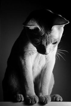 """""""Even cats grow lonely and anxious."""" --Mason Cooley"""