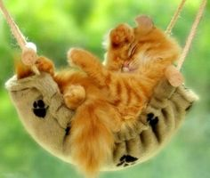 Kitten Ginger Fur, sleeping in a cat hammock Crazy Cat Lady, Crazy Cats, I Love Cats, Cute Cats, Funny Kitties, Cat Fun, Funny Pets, Kittens Cutest, Cats And Kittens