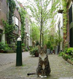 Leuke Poes in de Kerkstraat, Haarlem