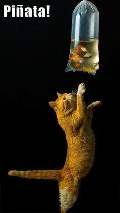 ¡Piñata de gato! #Humor #Risas #jajaja #Jokes #Fun #Funny #Divertido