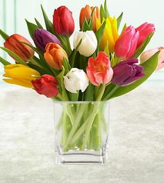 IN LOVE WITH TULIPS