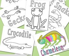 Discover Reptiles Coloring Sheets | Help your kids learn all about scaly creatures with these free coloring book pages.