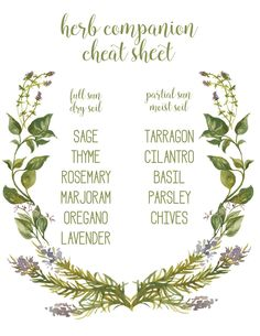 herb companion cheat sheet