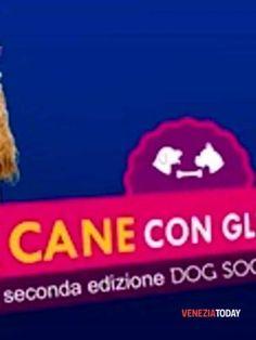 """Veneto: #""""Ritorna il #concorso di Ottica Veneta il cane con gli occhiali"""" (link: http://ift.tt/2kOtRyu )"""