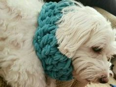 Check out this item in my Etsy shop https://www.etsy.com/listing/467931954/warm-comfy-doggy-scarf