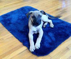 Dog Training Basics: Getting the Behavior