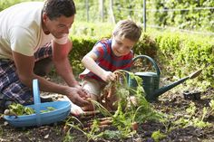 Father And Son Harvesting Carrots On Allotment - Libero Media