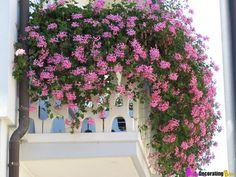 Un balcón lleno de preciosas flores...