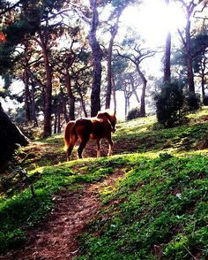 #horses #art #nature @natura