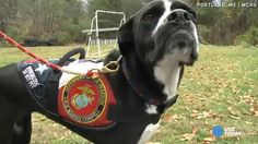 Love at first sight when war vet meets his service dog