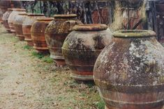 Ancient olive jars at Mital-a collection