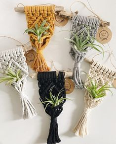 This item is unavailable Macrame Air Plant Holder // Mini Macrame Plant Hanger // Air Plant Display // Driftwood Air Plant H Driftwood Macrame, Macrame Art, Macrame Projects, Hanging Air Plants, Air Plant Display, Macrame Plant Holder, Macrame Design, Macrame Patterns, Diy Crafts To Sell
