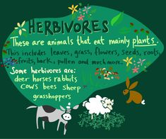 Herbivore, Carnivore, and Omnivore - Ms.