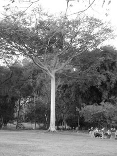 #tree#bw#beauty