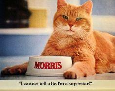 "Morris the cat | Vintage 1979 9 Lives Cat Food ""Morris the Cat"" Calendar - Tons of Cute ..."