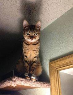 10 pruebas irrefutables de que los gatos están planeando nuestra destrucción