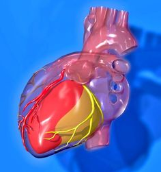 Dietary cholesterol is good for your heart and that there are other, more pressing factors that contribute to heart disease that have been ignored.  Oxysterols or Oxidized Cholesterol is a Major Factor in Heart Disease.