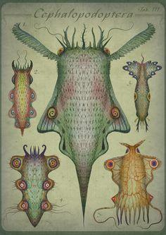 Cephalopodoptera / Tab III by Vladimir Stankovic