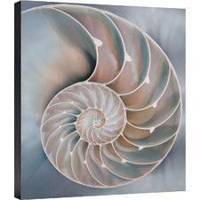Coastal Nautilus in Blue I Photographic Print on Wrapped Canvas