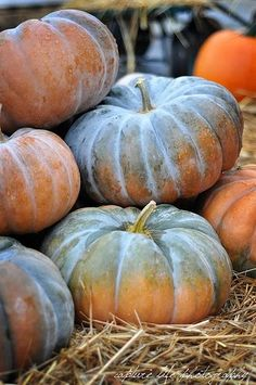 Fairy tale pumpkins-sweetest flavored pumpkin there is Pumpkin Farm, Pumpkin Spice, Harvest Time, Fall Harvest, Fruit And Veg, Fruits And Veggies, Vegetables, Photo Fruit, Autumn Aesthetic