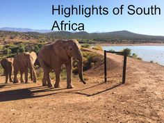 I struggle to find the right words to emphasise just how spectacular my trip to South Africa was. Itwas impossible to see and do everything in one trip as there is an astounding array of activitie…
