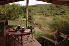 Lalibela Game Reserve and Safari Lodge, Addo Elephant Park, Eastern Cape, South… Elephant Park, Game Reserve, Tree Tops, Outdoor Furniture, Outdoor Decor, Lodges, South Africa, Safari, Cape
