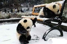 For the love of Pandas. So Cute!