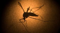 Top Obama administration health officials sounded a dire warning Monday about the spread of the Zika virus as the spring and summer months approach, saying the number of states where one Zika-spreading mosquito is known to live has more than doubled -- a warning that comes amid a funding battle on Capitol Hill.