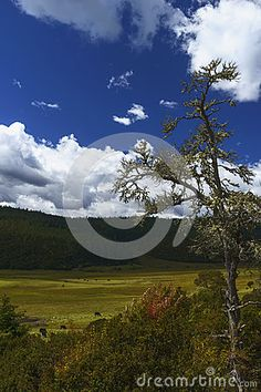 shangri la meadow landscape with blue sky at pudacuo national park.