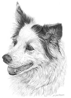 Offering the finest pencil drawing from a photo of your most special companions.