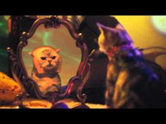 """Check out """"I Haz a Catnip in Mah Head."""" It's the new music video from Walter and the Wizards, brought to you by Litter Genie®. - http://nib.ly/nLNF"""