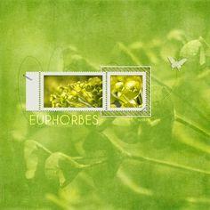 13 04 14 Terra Botanica 8 F