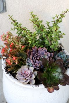 Great succulent potting