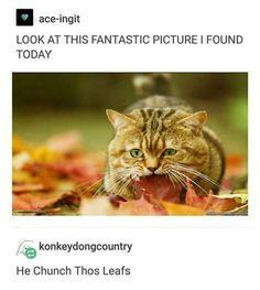 My naym is cat, and en da fal, when da chil wynds, make ur skin krawl, I sit rite doun, and wif sharp teef, I choos de one, I crounch de leaf