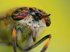 Bug with hypnotize eyes by Roman Vanur, via Flickr