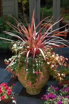1608 best Container gardening ideas images on Pinterest ...