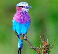 Shangrala's Colorful Birds