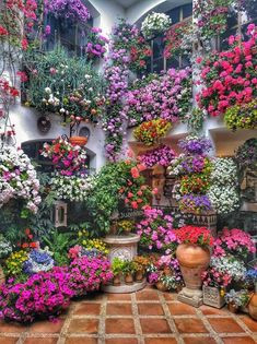 Amazing Flowers, Beautiful Flowers, Beautiful Places, Balcony Garden, Garden Plants, Potted Plants, Flower Aesthetic, Flower Planters, Fall Planters