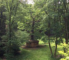 Folly Secret Oak in summertime. Photograph Beatrice Oosten