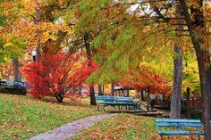 Fall Foliage #Photography #Springfield #Missouri