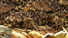 bees nesting - Google Search