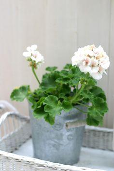Az én kis fehér Home: virágos