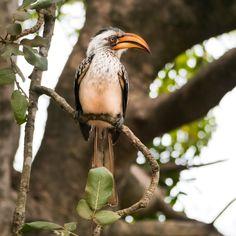 Лучших изображений доски «ПТИЦЫ. ТУКАНЫ (toucan)»  49  734c8056b330