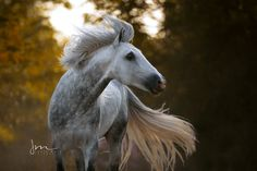 Some Beautiful Images, Beautiful Horses, Farm Images, Horse Photography, Wild And Free, Wild Animals, Ponies, Spanish, Pretty