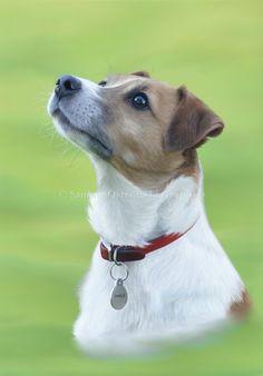 Charlie- Dog. Digital Illustration.