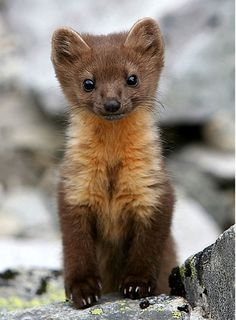 All Baby Animals | The 24 cutest baby animal species of all time