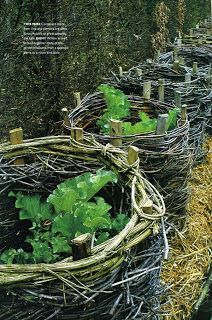What you dont know about growing rhubarb, but prob...