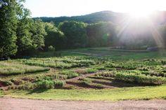 Blackberry Farm: August is Garden Month