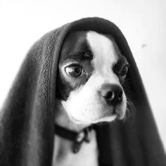 This is not the Boston that you are looking for. Move along.