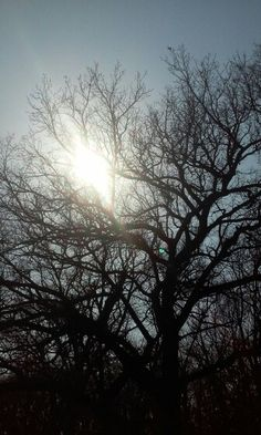The Sun in the trees